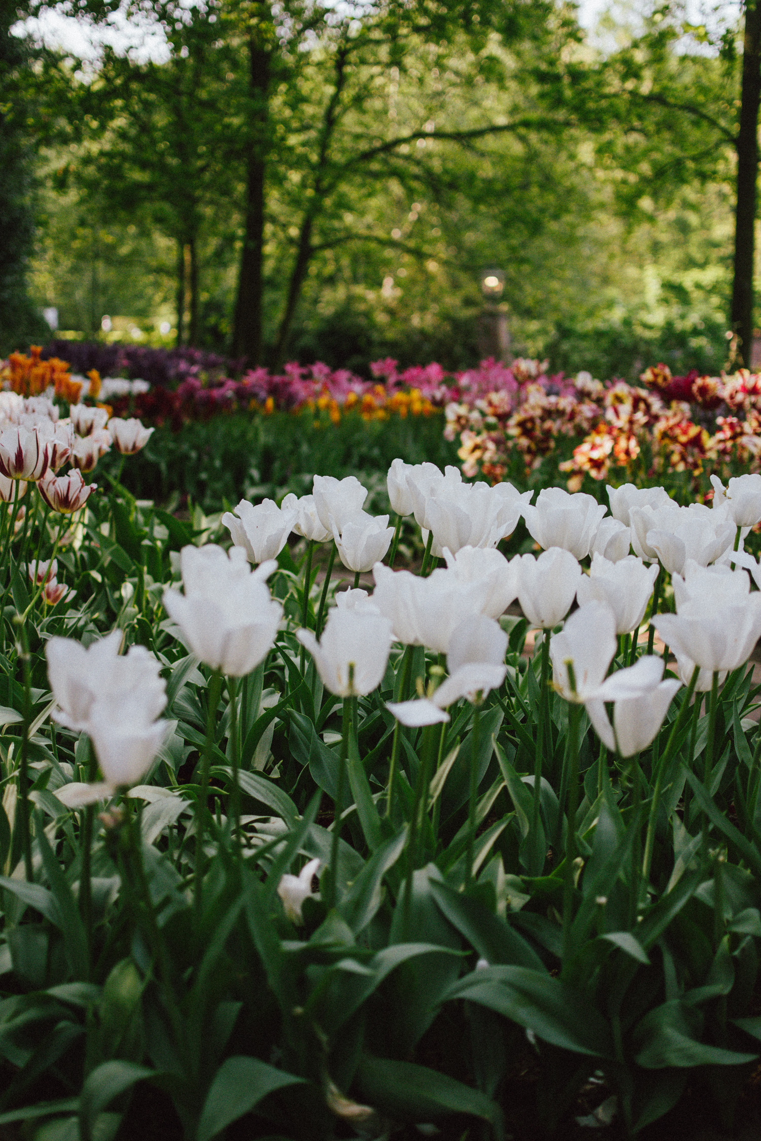 The Best Time To Visit Keukenhof And The Popular Tulip
